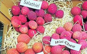 ¿Por qué se cultiva litchi en la provincia?