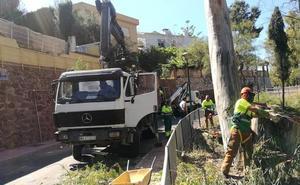 Trabajos para evitar caídas de árboles en Cerrado de Calderón