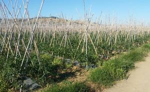 La Junta adelanta al 22 de abril los riegos agrícolas en la comarca del Guadalhorce