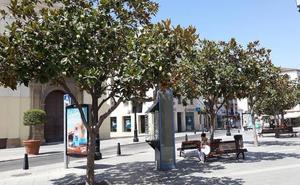 Recogen más de dos mil firmas en contra de la supresión de árboles por la peatonalización en Vélez-Málaga