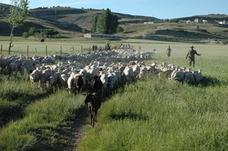 La Serranía de Ronda acoge este año la Escuela de Pastores de Andalucía