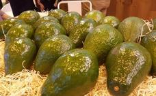 Los productores de frutas tropicales analizan los retos de futuro del sector