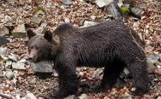 Hasta un millón de especies podrían verse amenazadas de extinción