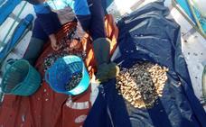 La flota del marisco se prepara para la veda de la coquina los meses de mayo y junio