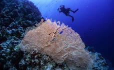 La ONU alerta de que la destrucción de la naturaleza amenaza la humanidad «al menos tanto» como el cambio climático