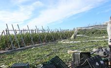 Junta pide una «corrección» al Gobierno en la rebaja de módulos del IRPF para la agricultura