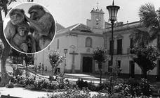 Cuando los monos dominaban la Plaza de la Victoria