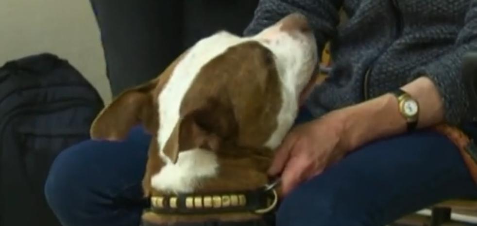 Una perra asiste al juicio de su propio maltrato