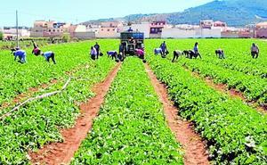 Charentais, el melón del Valle del Guadalhorce que se comen los franceses