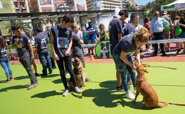 Los perros se hacen con la Plaza de la Marina