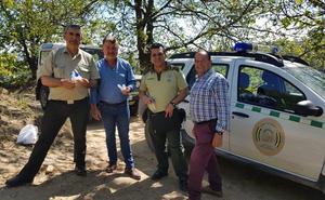 La Junta inicia la suelta de las primeras dosis del depredador contra la avispilla del castaños
