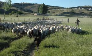 La Junta anuncia un plan para reestructurar y modernizar las Oficinas Comarcarles Agrarias
