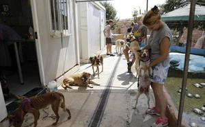 La Protectora de Animales reclama que la ley de caza de la Junta proteja a los perros de las rehalas