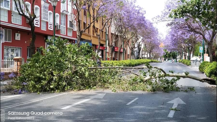 Málaga, en aviso amarillo este fin de semana por fuertes vientos