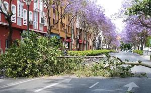 Un segundo árbol de gran tamaño corta ahora al tráfico la avenida Juan Sebastián Elcano