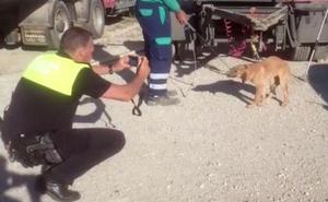 Atrapan al primero de los perros de la jauría que dejó en estado crítico a un joven