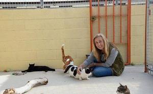 «Son animales abandonados que comen de la basura y cazan para salir adelante»