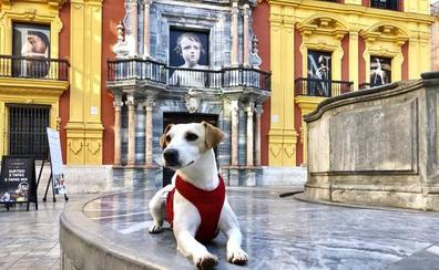 El perro 'influencer' Pipper llega a Málaga para promocionar la ciudad como destino para viajar con mascotas
