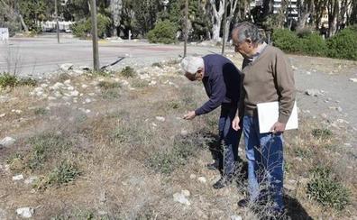 La Junta vallará parte de los Baños del Carmen para proteger una planta en peligro de extinción
