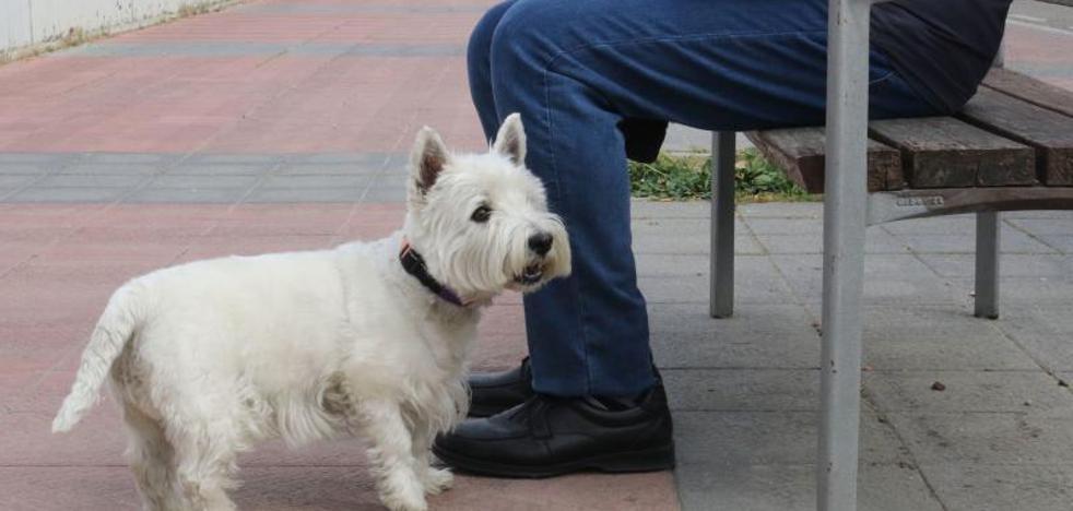 La lucha de 'Cachas': el juicio por la custodia de un perro en España