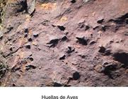 Científicos estudian si las huellas de homínidos halladas en Álora son las más antiguas del continente
