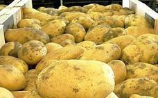 La Junta promociona la patata nueva andaluza