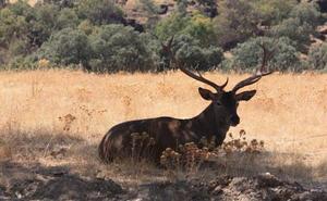 Agricultura publica la oferta de permisos de caza para la temporada 2019-2020 en terrenos gestionados por la Junta