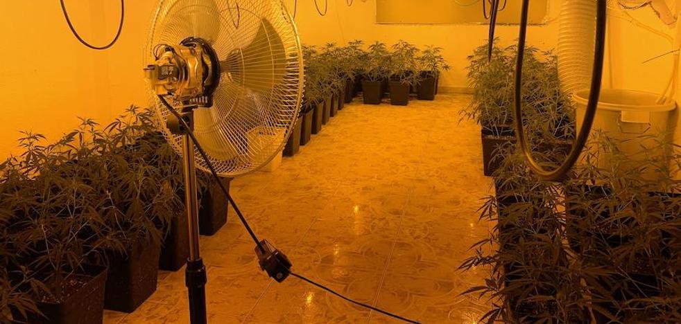 They seize 300 cannabis plants by dismantling a marijuana lab in Vélez-Málaga