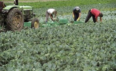 Agricultura realiza en cuatro meses pagos pendientes a jóvenes agricultores por importe de 1,2 millones en Málaga