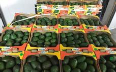 Temor entre los agricultores malagueños por el aumento de envíos de aguacates de México a UE por los aranceles de Trump