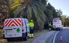 El Ayuntamiento de Marbella aboga por métodos ecológicos para controlar las plagas
