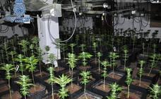Diez detenidos tras desmantelar un invernadero de marihuana en una finca rústica de Ronda