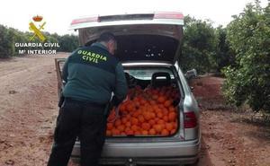 ¿Sabes qué es el DAT de los productos agrarios y forestales?