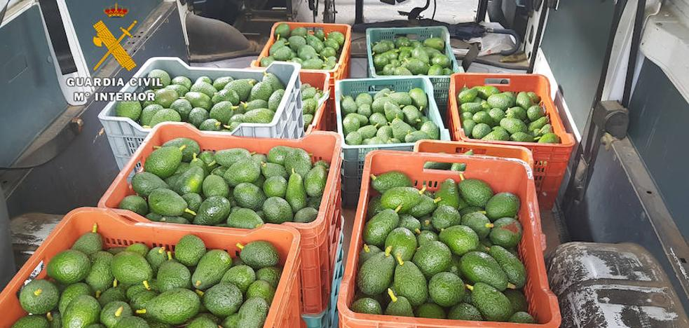 Nine arrested for the theft of avocados in the Axarquía