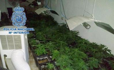 Detienen a un padre y su hijo por cultivar marihuana en una finca de Puerto de la Torre