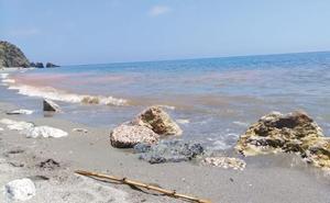 Tras las salpas, regresan las 'manchas' naranjas a las playas de Málaga