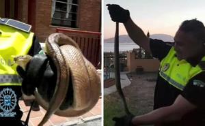 Capturan en cinco días tres serpientes de gran tamaño en distintas viviendas de la capital