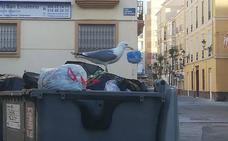 Denuncian ataques de gaviotas en El Torcal