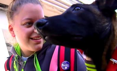 Prohiben a una mujer maltratada subir al autobús de Vigo con su perro de terapia