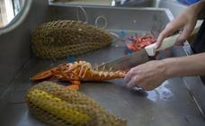 La subida de temperatura calenta la pesquería de la langosta