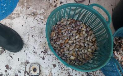 El caladero de coquina y concha fina entre Málaga y Río Vélez seguirá cerrado