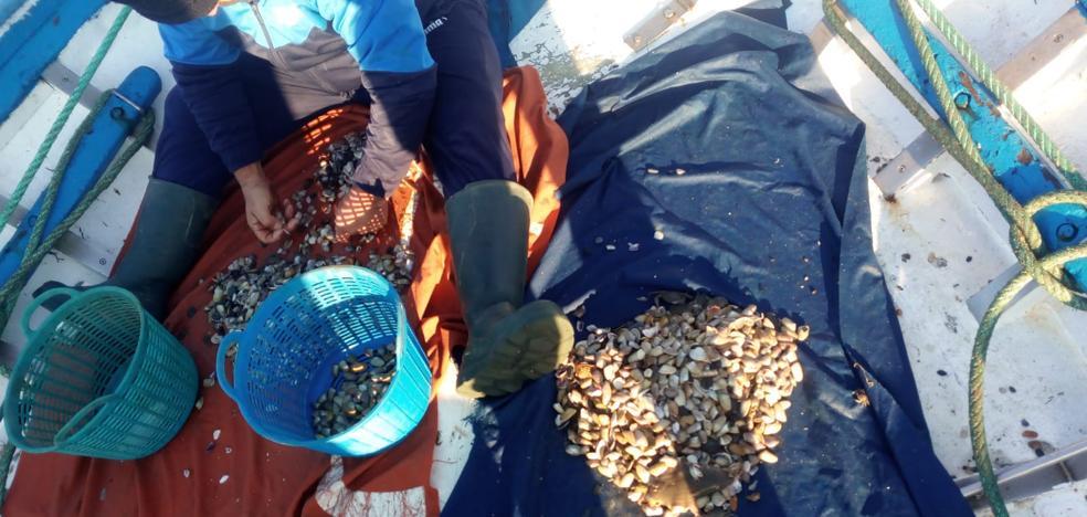 La Junta abre el caladero de coquina y concha fina entre Málaga y Río Vélez tras el último análisis