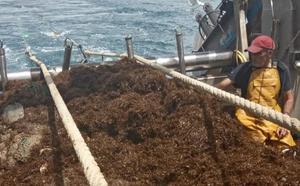 Expertos reclaman un estudio sobre el alga invasora