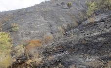 Investigan a un hombre por el incendio forestal en el paraje de Carvajal de Málaga