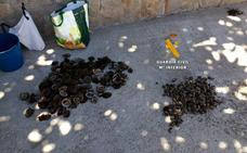Intervienen 227 ejemplares de una lapa protegida en Marbella