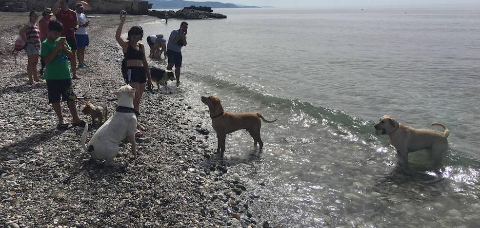 Playas de Málaga para ir con perro este verano