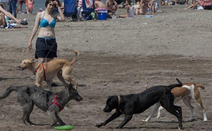 Playas de Málaga para llevarte al perro este verano