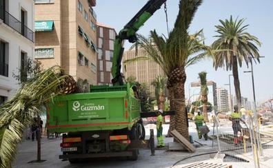 La Alameda Principal se prepara para su estreno con nuevas palmeras y sillas