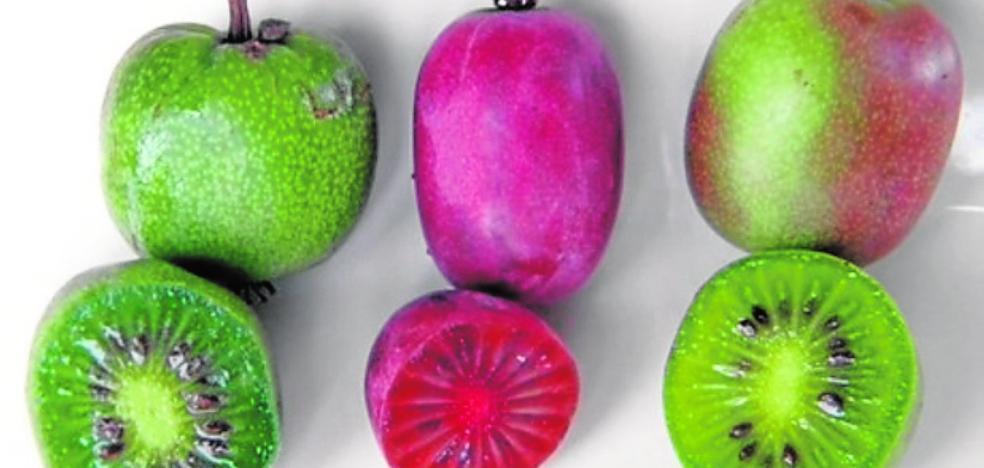 Prueban el kiwiberry como alternativa al arándano en Huelva