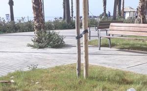 Plaza de la Malagueta: las malas hierbas dañan a las nuevas jardineras